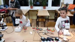 Jakie oczy ma ważka? Mikroskopujemy!
