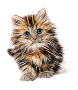 Konkurs literacki o kocie!