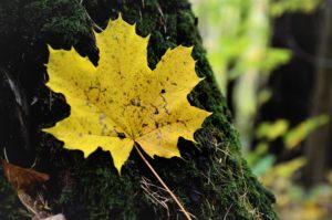 """Wyniki konkursu fotograficznego """" Barwy jesieni"""""""